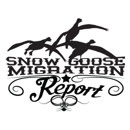 Snow Goose Migration Report